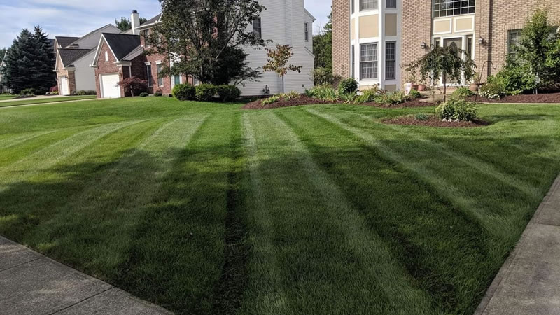 How To Have The Best Looking Lawn On Your Street.