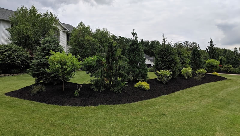Tree, Hedge, and Shrub Planting